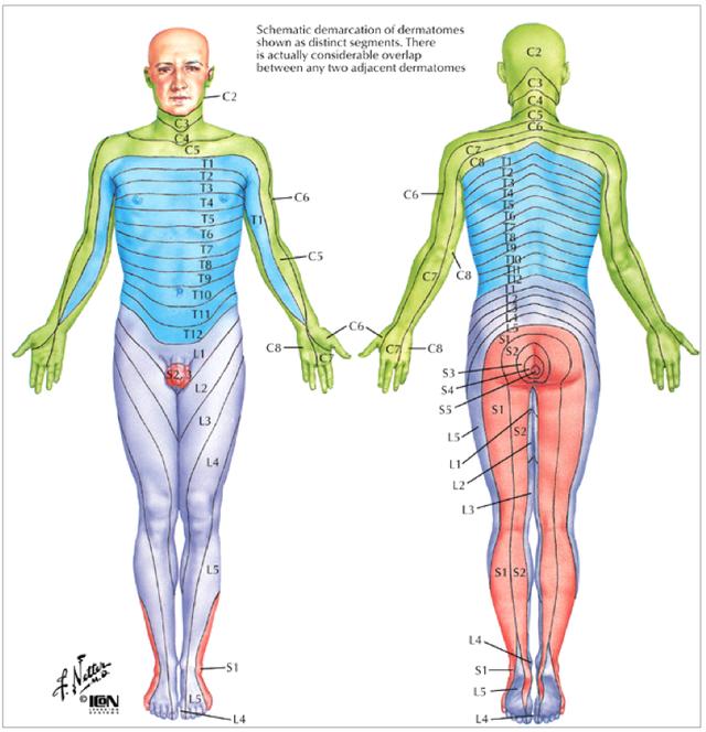 Dermatome map diagram