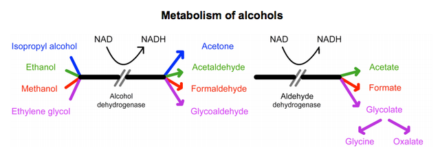 Metabolism of alcohols diagram