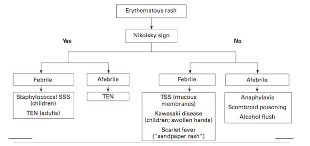 Erythematous rash workup pathway