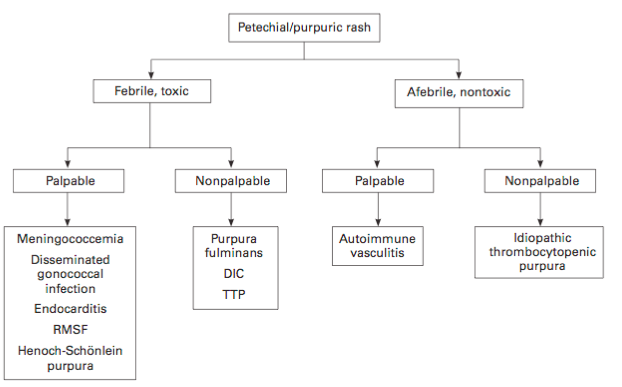 Petechial or purpuric rash workup pathway